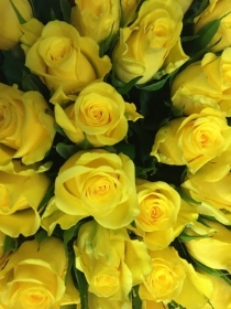 Yellow Moonwalk Roses